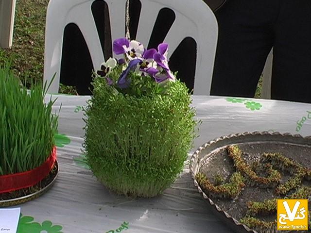 انواع بذر هفت سین آموزش سبز کردن سبزه عید