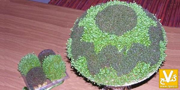 کاشت سبزه با کنجد آموزش روش درست کردن سبزه ی دورنگ به 2 روش