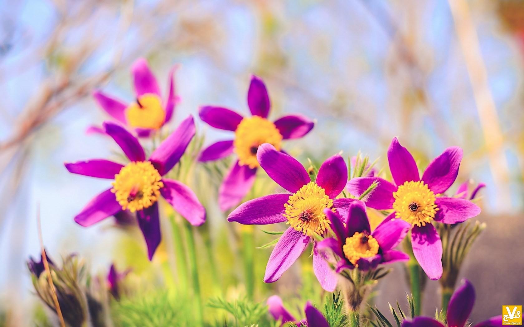 spring-flowers-nature-bokeh-wallpaper-1680x1050