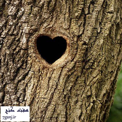 heart_in_the_nature-7ganj (7)