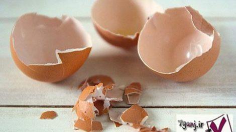 استفاده از پوست تخم مرغ در پيوند استخوان