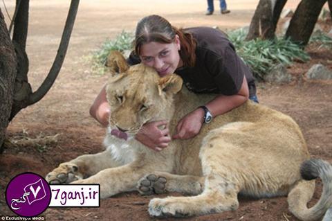 زندگی دختر جوان با شیر نر !   تصاویر
