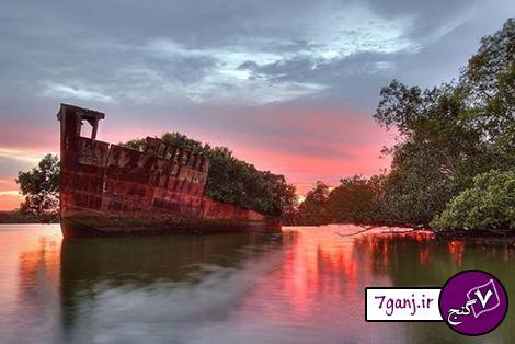 جنگل شناور در سیدنی ! / تصاویر