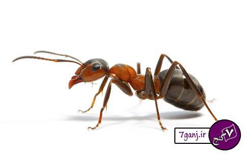 مردی که با خوردن مورچه ۶ روز زنده ماند !!