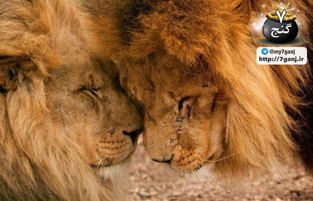 راه های جالب ارتباط برقرار کردن حیوانات با هم