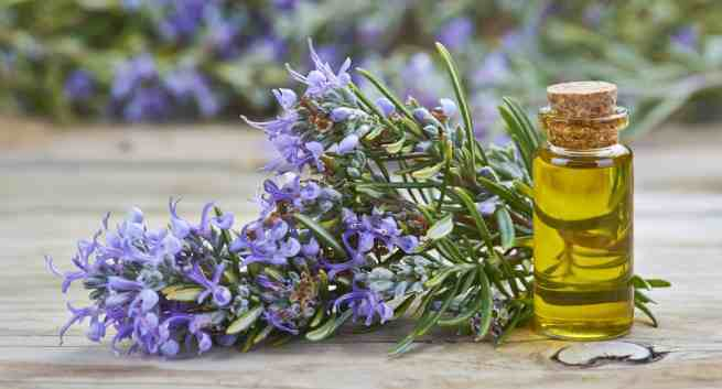 diseases-rosemary-oil-stimulant-THS-1