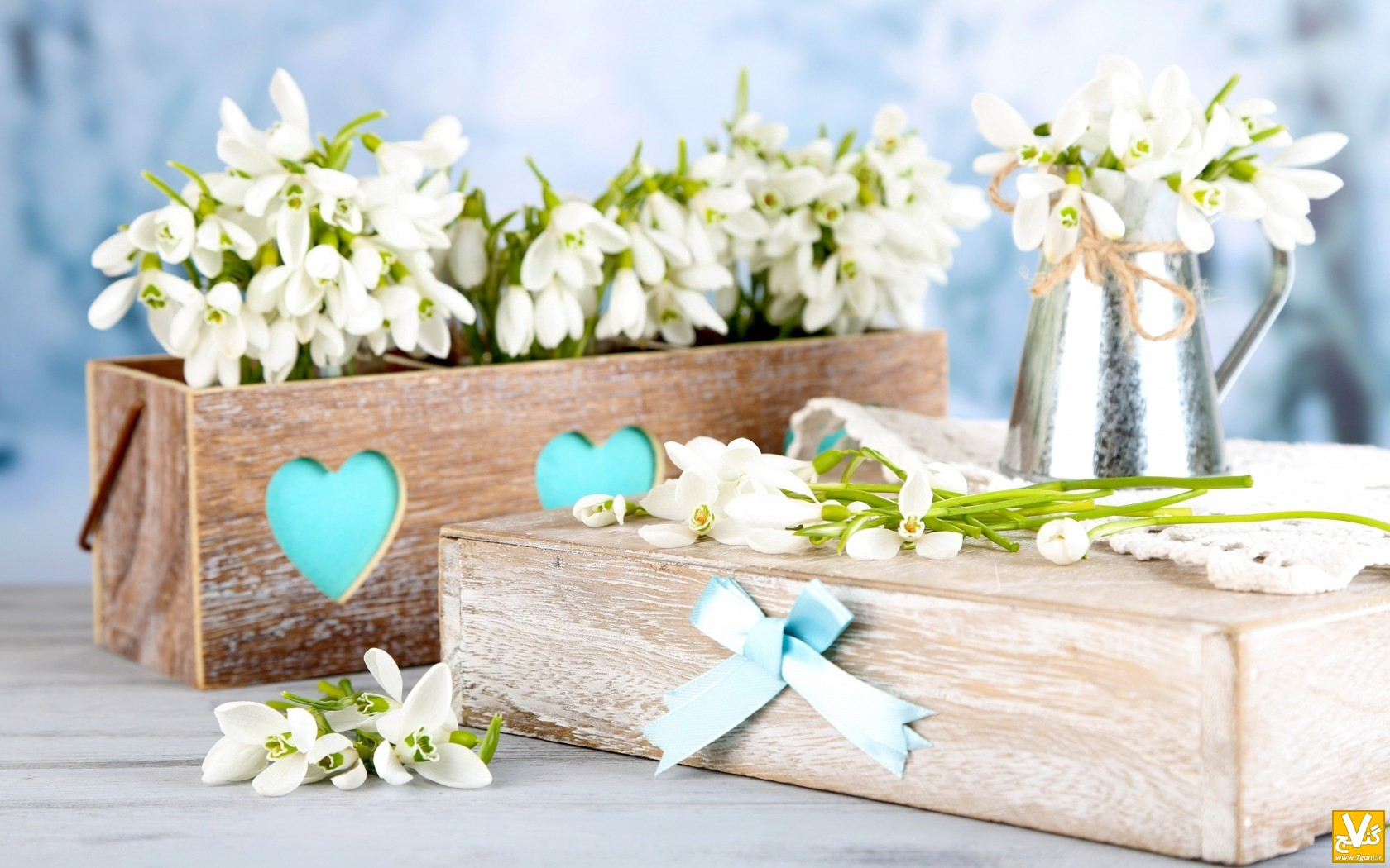 spring-snowdrops-flowers-bouquet-wallpaper-1680x1050