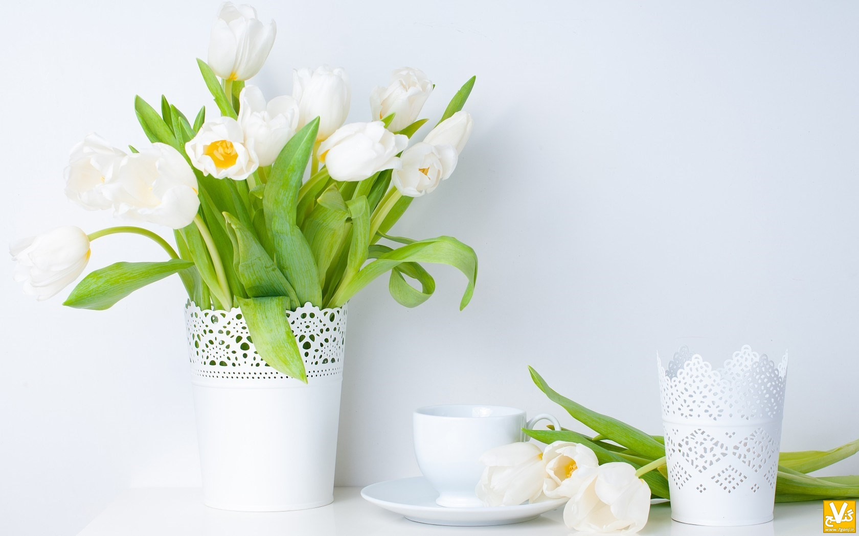 tulips-white-flowers-vase-spring-wallpaper-1680x1050
