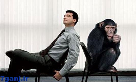 تفاوت مغز انسان و حيوان