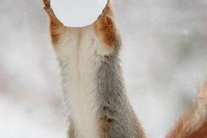 عكس سنجاب در حال برف بازي
