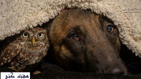 دوستي سگ و جغد
