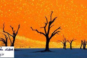 Dead Vlei در پارک Namib-Naukluft