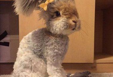 خرگوشي با گوشهايي شبيه بال فرشتگان