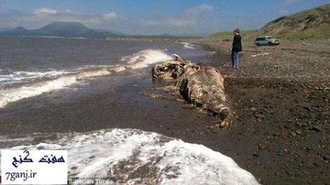 کشف يك موجود عجیب و ناشناخته در سواحل روسیه