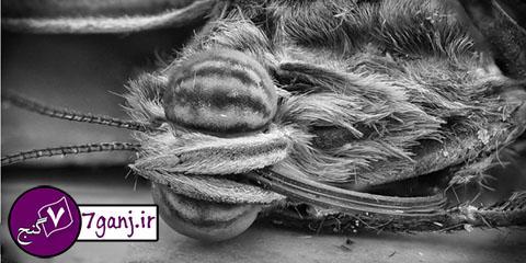 زنبور عسل از زير ميكروسكوپ