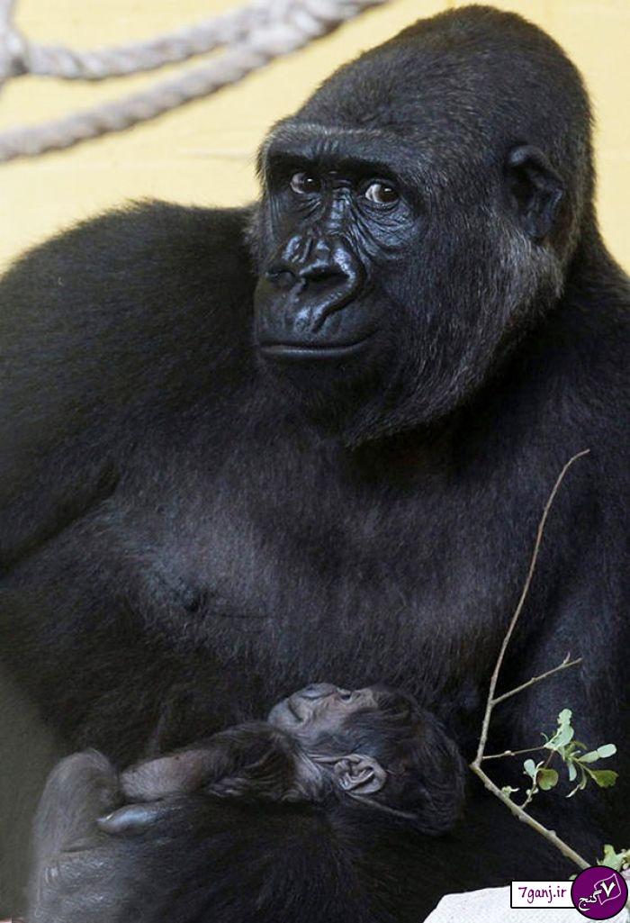 تصاویر ژست گرفتن جالب حیوانات