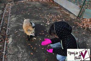 روستاي روباهها در ژاپن