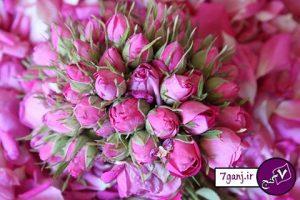گل سرخ ( گل محمدي)