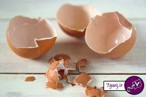 فواید پوست تخم مرغ