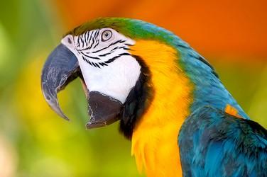 https://7ganj.ir/img/2016/01/Parrots-www.7ganj.ir_.jpg