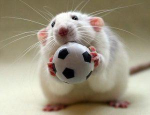 hamsters7-e7