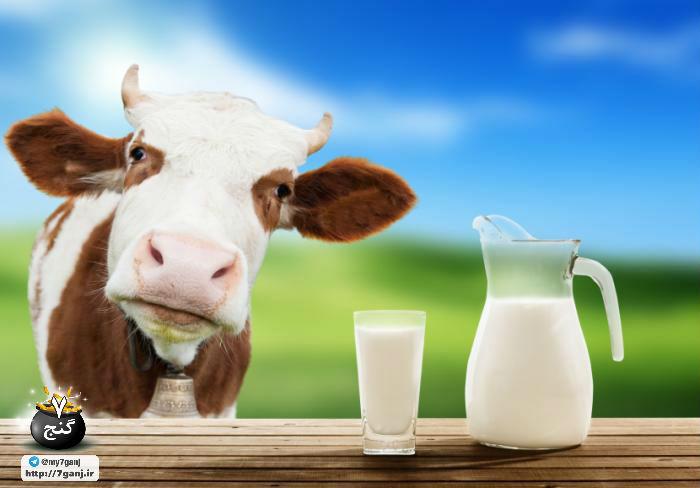 شیر گاو برای نوزادان