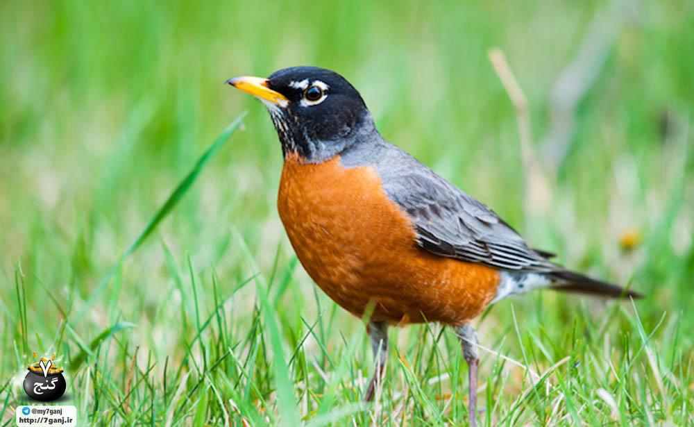 پرندگان در محل زندگی شما سبب جلوگیری از افسردگی و اضطراب می شوند