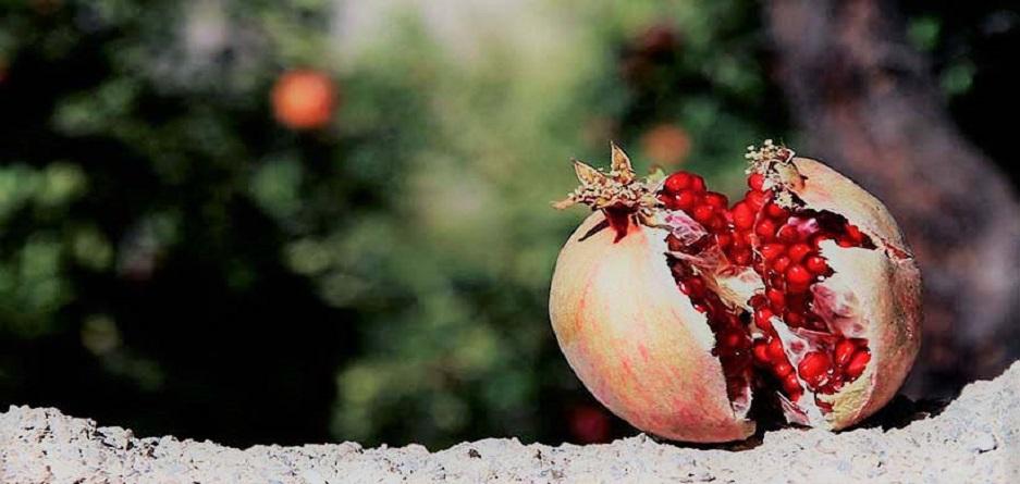 انار میوه بهشتی
