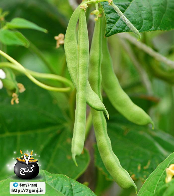 خواص لوبیا سبز