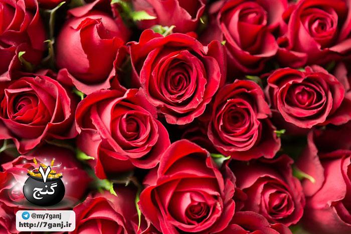 اسانس گل سرخ