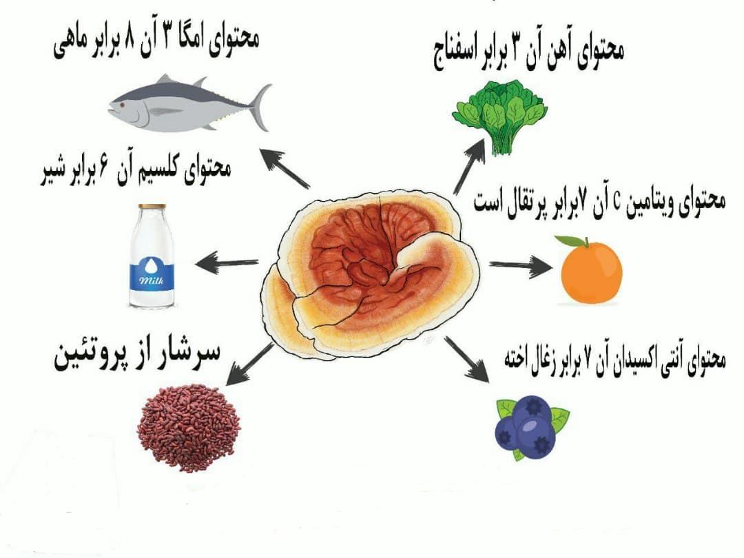 ارزش غذایی قارچ گانودرما