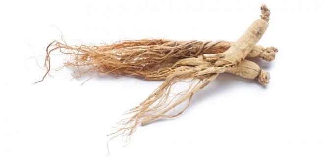 ریشه ی جینسینگ