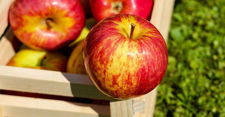 طرز تهیه رابطه سیب و کاهش وزن